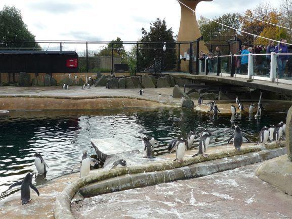 エディンバラ動物園(Edinburgh Zoo)_c0076387_06063270.jpg
