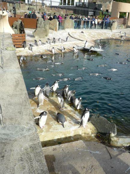 エディンバラ動物園(Edinburgh Zoo)_c0076387_06063723.jpg