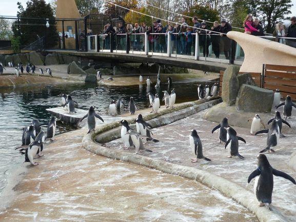 エディンバラ動物園(Edinburgh Zoo)_c0076387_06064747.jpg