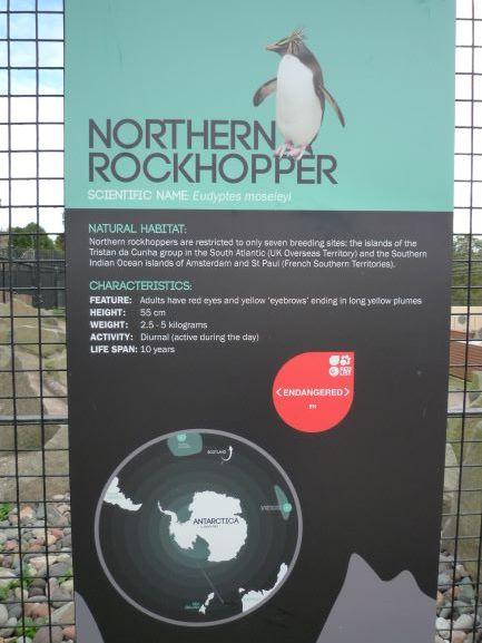 エディンバラ動物園(Edinburgh Zoo)_c0076387_06133238.jpg