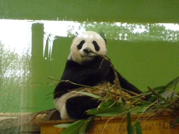 エディンバラ動物園(Edinburgh Zoo)_c0076387_06150503.jpg