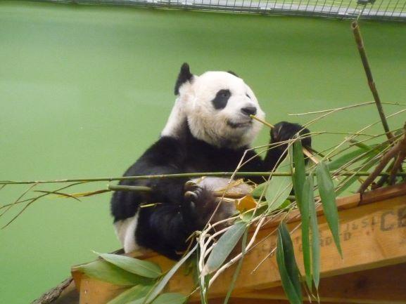 エディンバラ動物園(Edinburgh Zoo)_c0076387_06150959.jpg