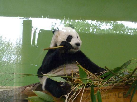 エディンバラ動物園(Edinburgh Zoo)_c0076387_06151293.jpg