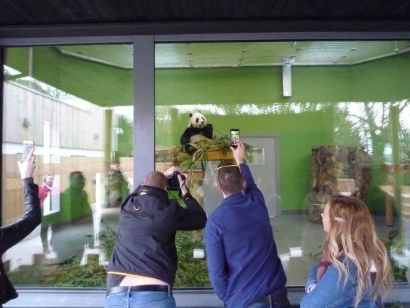 エディンバラ動物園(Edinburgh Zoo)_c0076387_06151672.jpg