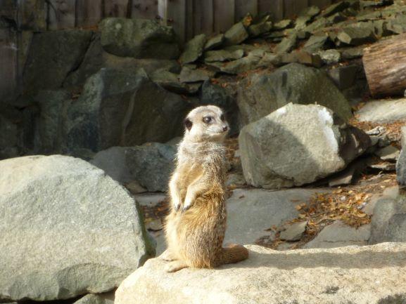 エディンバラ動物園(Edinburgh Zoo)_c0076387_06162912.jpg