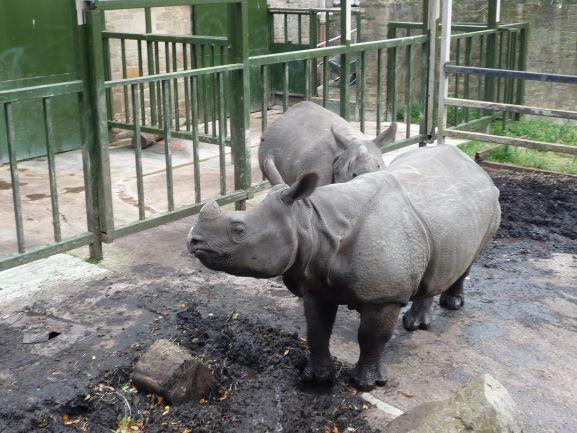 エディンバラ動物園(Edinburgh Zoo)_c0076387_06163549.jpg