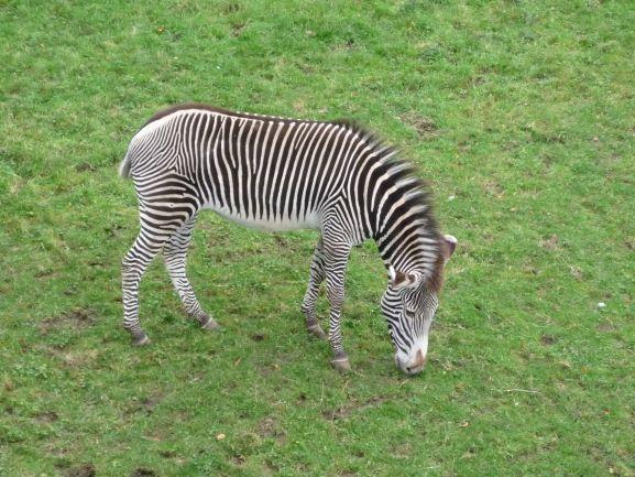 エディンバラ動物園(Edinburgh Zoo)_c0076387_06164021.jpg