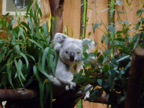エディンバラ動物園(Edinburgh Zoo)_c0076387_06164618.jpg