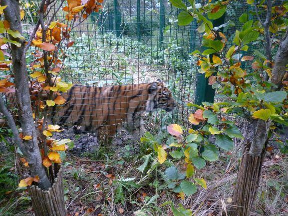 エディンバラ動物園(Edinburgh Zoo)_c0076387_06171032.jpg