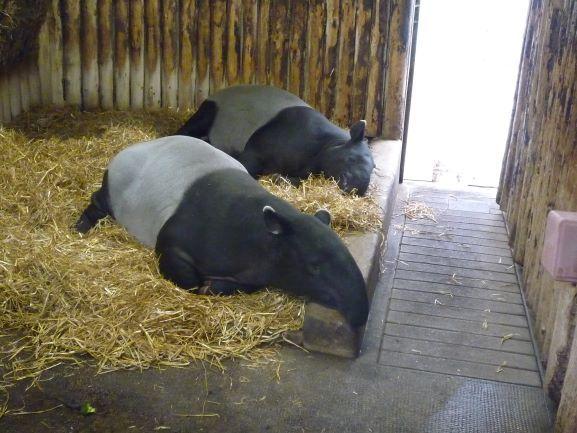エディンバラ動物園(Edinburgh Zoo)_c0076387_06172199.jpg