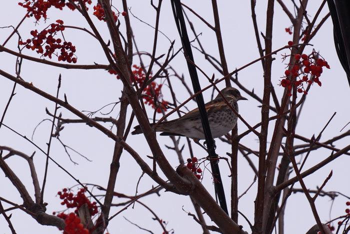小鳥_d0162994_08250945.jpg