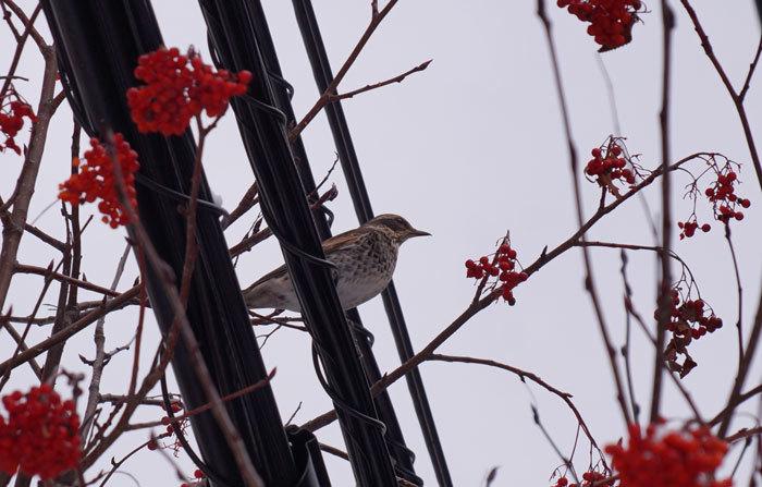小鳥_d0162994_08251823.jpg