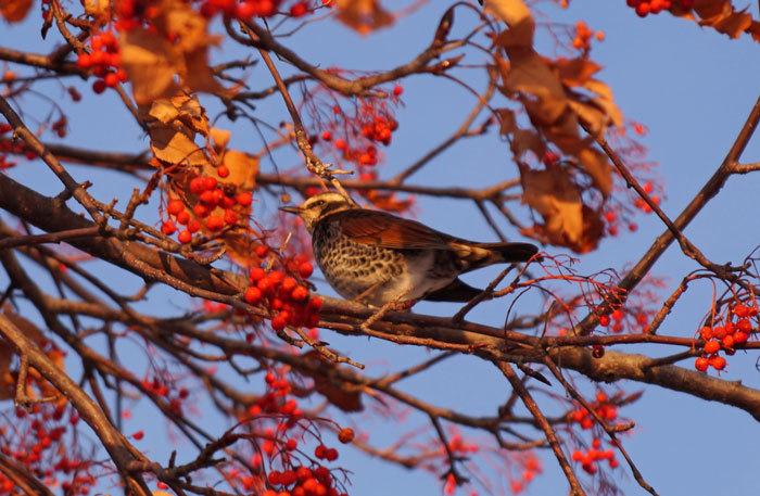 小鳥_d0162994_08252957.jpg