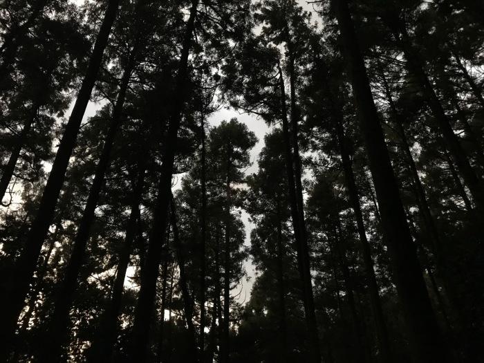 休みがあったら山登りin糸島-可也山(糸島富士)_f0232994_13522797.jpg