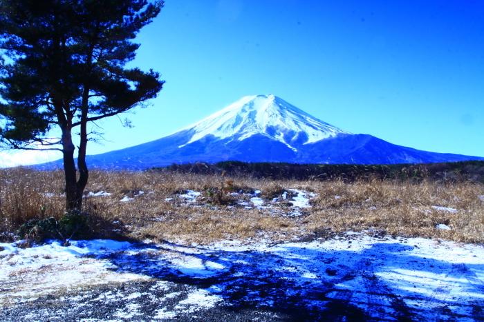 令和2年1月の富士 (9) 北富士演習場の富士_e0344396_16332027.jpg