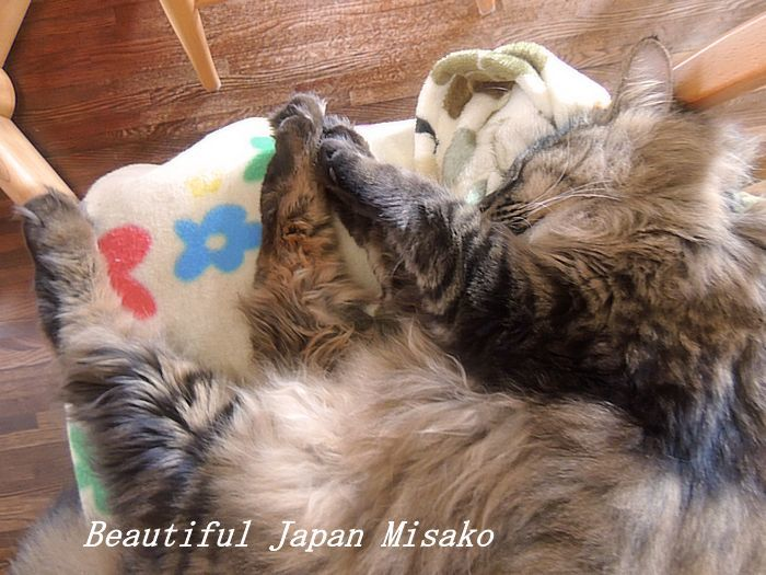寝姿に癒されるぅ~~♡キリ🐱・゚☆、・:`☆・・゚・゚☆。_c0067206_11193555.jpg