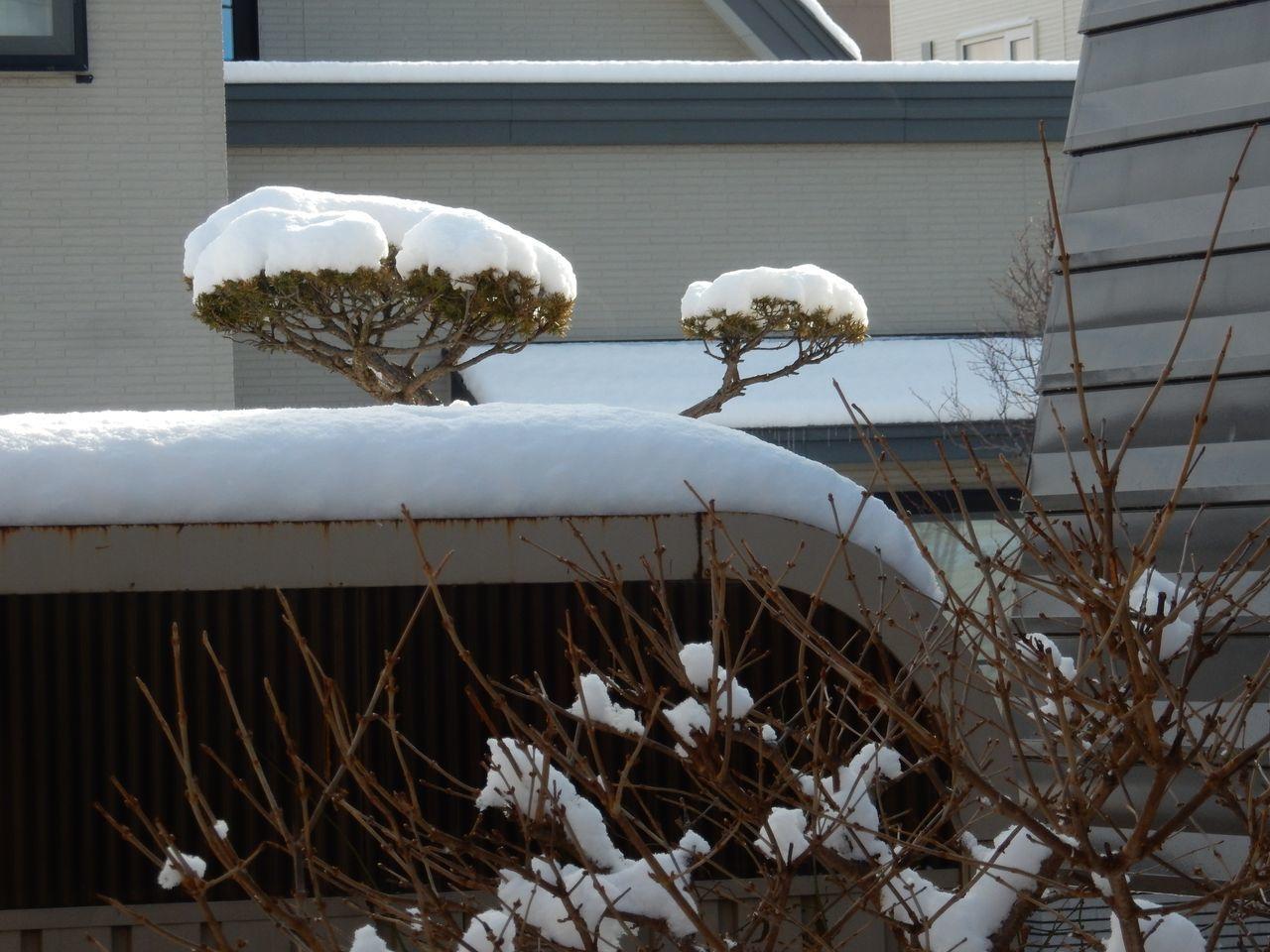 ようやく雪らしい雪が積もりました_c0025115_21121377.jpg