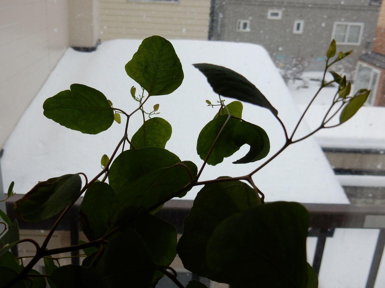 ようやく雪らしい雪が積もりました_c0025115_21180073.jpg