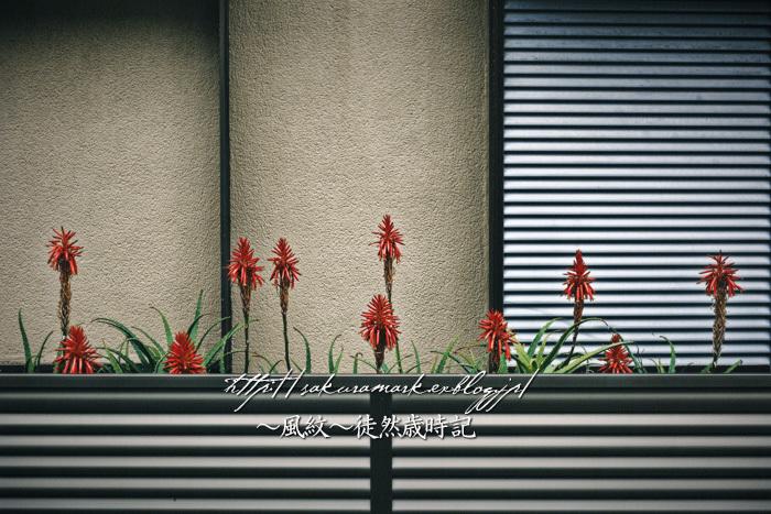 冬の朱い花。_f0235723_17531324.jpg