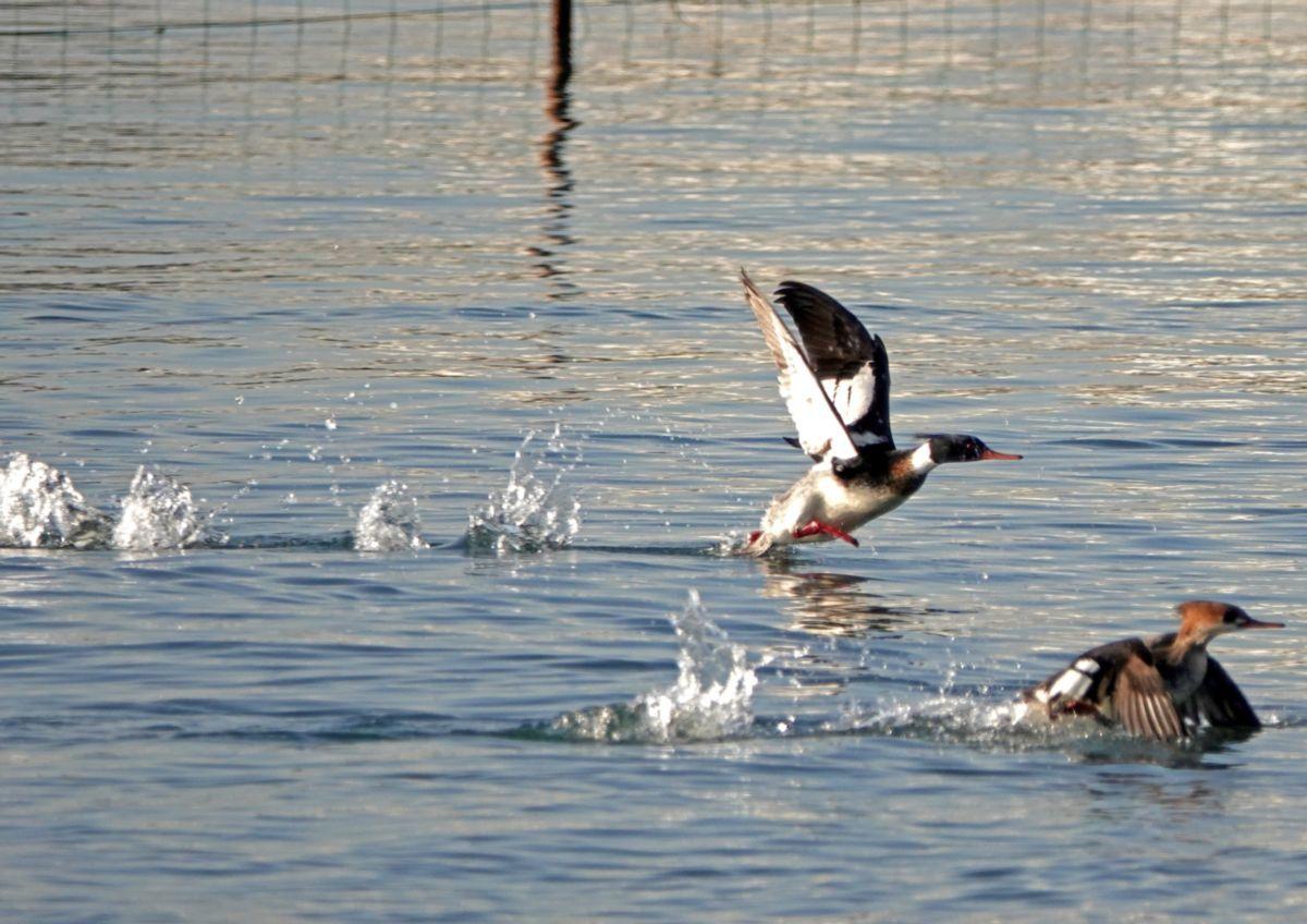 おなじみの鳥たち_c0104227_20040829.jpg