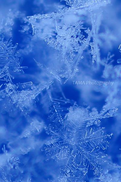 雪の朝_c0024729_16114613.jpg