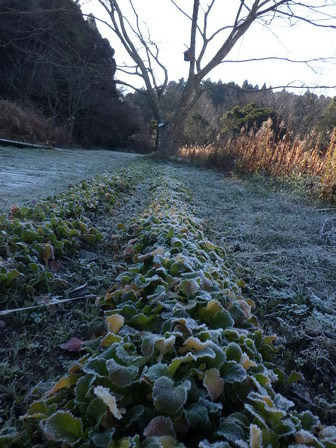 霜が降りました_a0123836_17123971.jpg