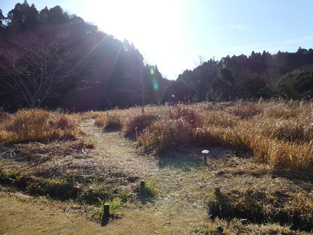 霜が降りました_a0123836_17134004.jpg