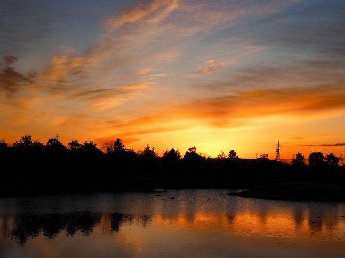 オオハクチョウの塒は地元の小さな池_d0290240_10031078.jpg