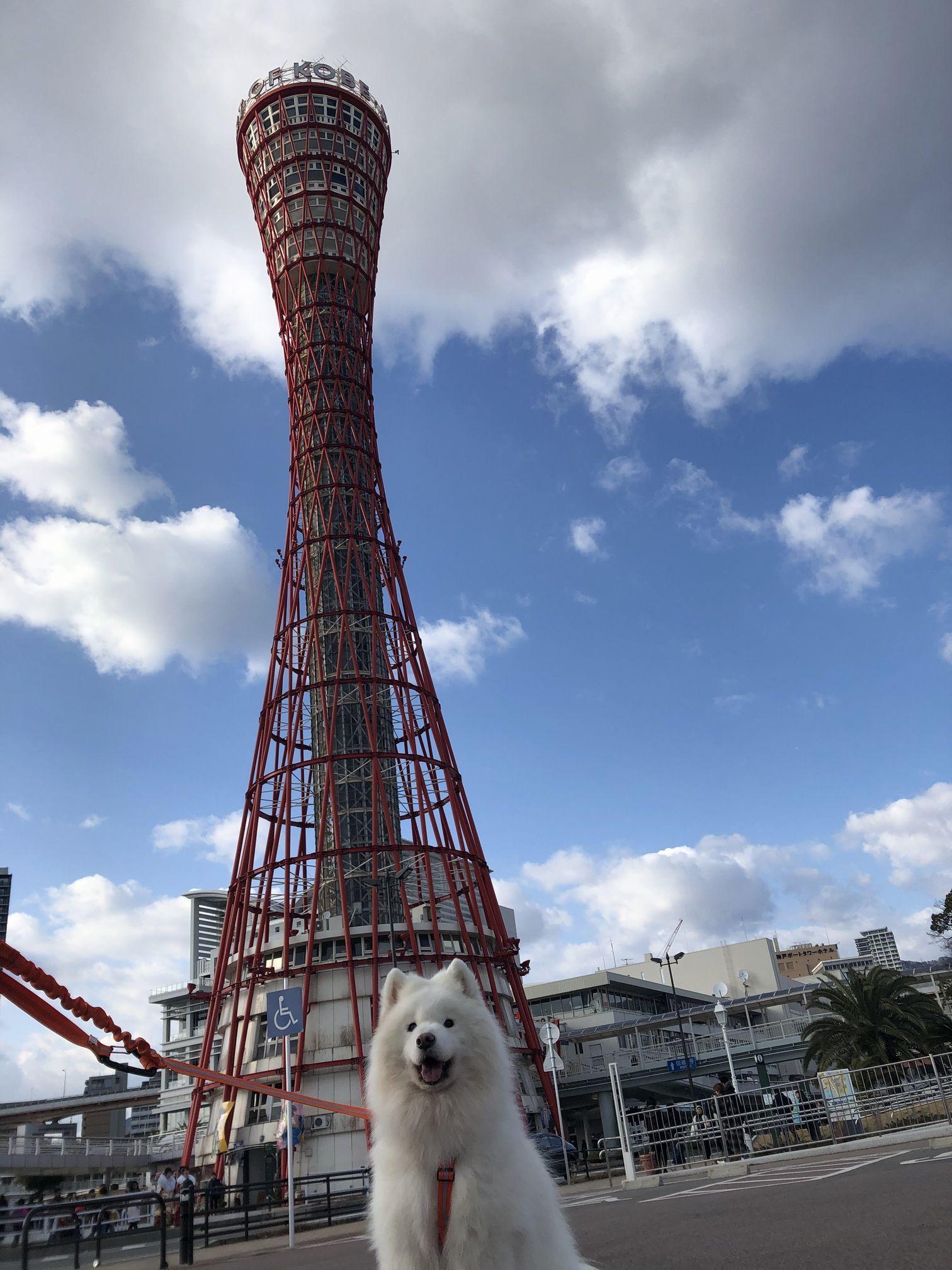 ひさしぶりの神戸で_f0128542_13085422.jpg