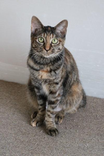 里親さま募集中の保護猫さん_e0151545_21312966.jpg