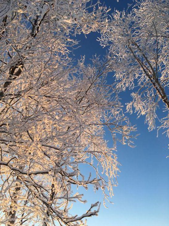 樹氷(カシュウィットナ湖)_b0135948_15561386.jpg