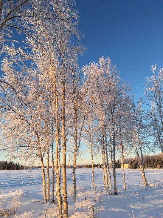 樹氷(カシュウィットナ湖)_b0135948_15562890.jpg