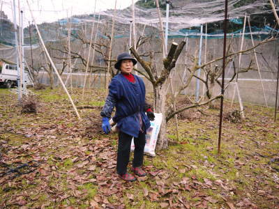 太秋柿 剪定作業2020 今年は今までと全く異なり低く仕上げています(前編)_a0254656_17053637.jpg