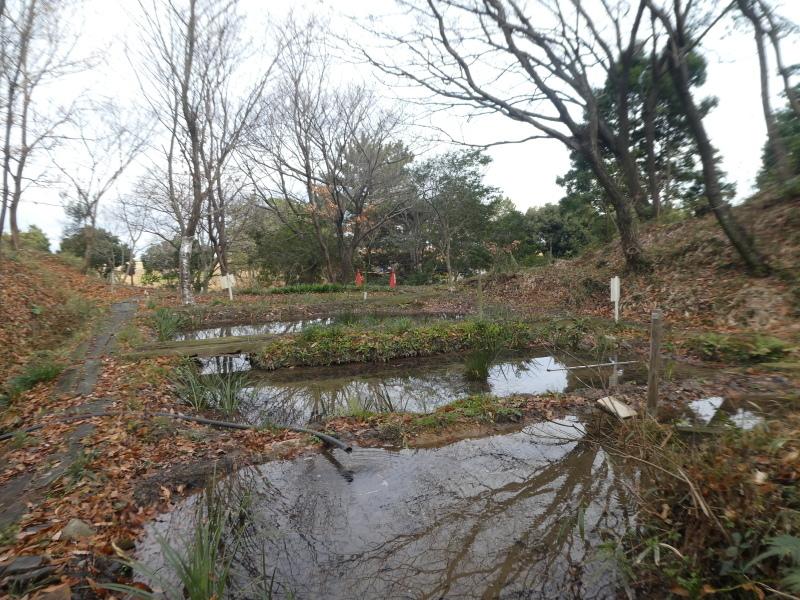 「新春里海まつり」の反省&提案・・・うみべの森を育てる会_c0108460_16494612.jpg