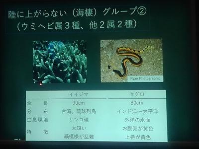 ウミヘビ講座_c0180460_17544303.jpg