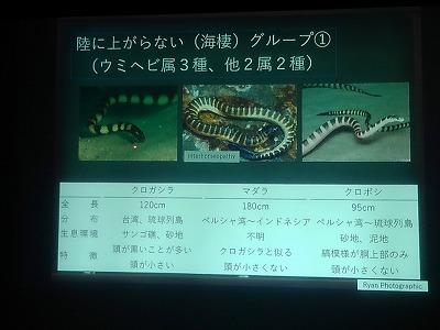 ウミヘビ講座_c0180460_17544338.jpg