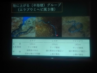 ウミヘビ講座_c0180460_17544355.jpg