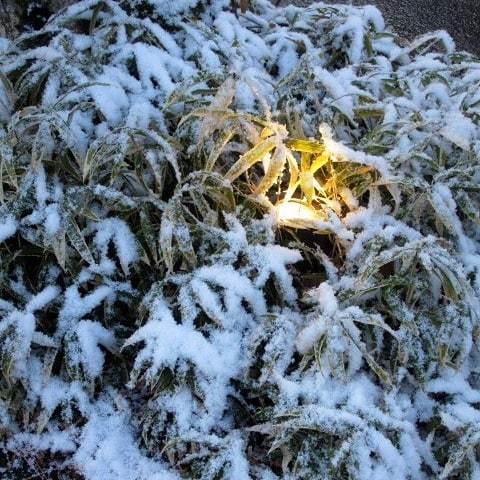 雪景色の旧軽井沢 * ベーカリー&レストラン 沢村~おかしやあした_f0236260_06112962.jpg