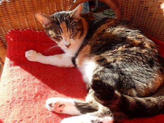 '20,1,16(木)太陽に愛された猫!_f0060461_10044860.jpg