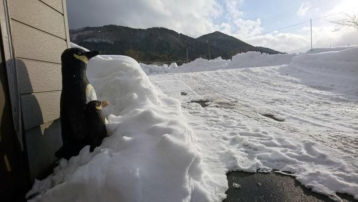 暖冬少雪_c0108174_15134605.jpg