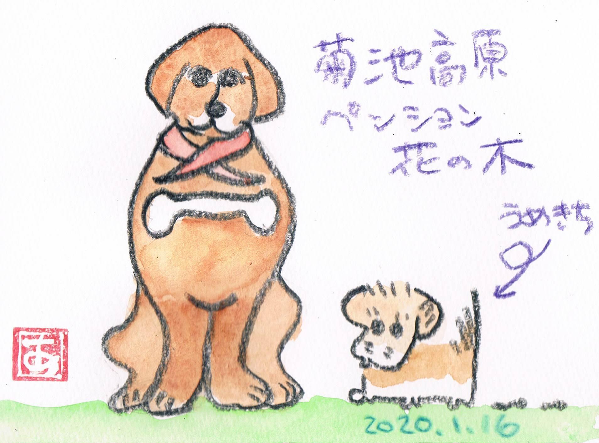 ペンション花ノ木のわんこ_e0232277_14130947.jpg