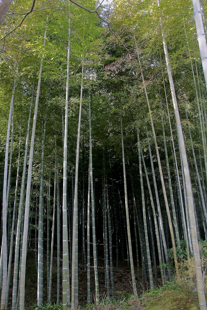 嵐山.嵯峨野4_a0170082_08523698.jpg