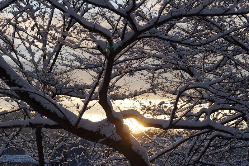 久しぶりの雪の朝_d0162994_09291119.jpg