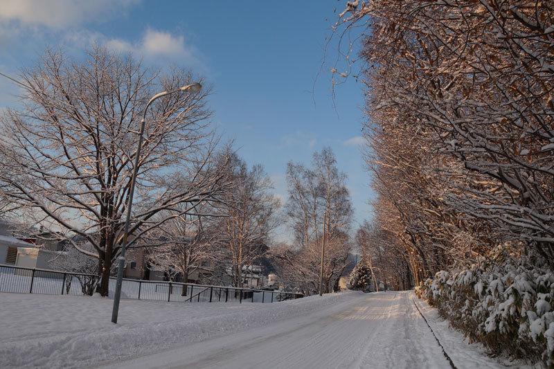久しぶりの雪の朝_d0162994_09293015.jpg