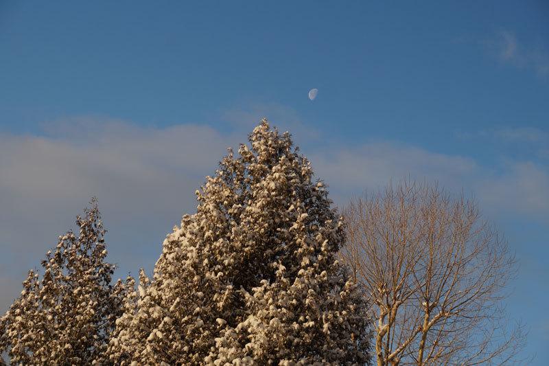 久しぶりの雪の朝_d0162994_11081060.jpg