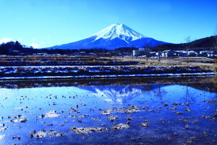令和2年1月の富士 (10) 農村公園冬の水田の富士_e0344396_22131496.jpg