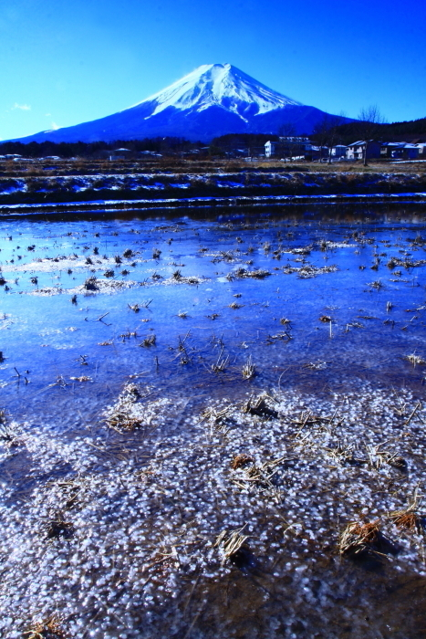 令和2年1月の富士 (10) 農村公園冬の水田の富士_e0344396_22133583.jpg