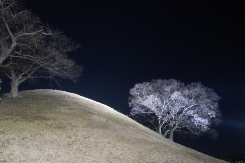 2019年 歳納め大邱 ⑮うっとりするほど美しい! 夜の慶州_a0140305_02444462.jpg