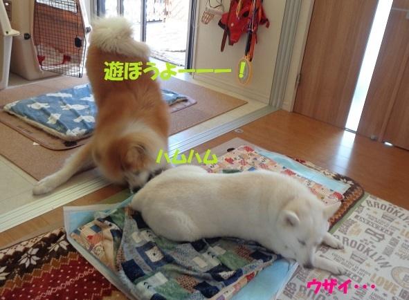 お決まりの儀式(笑)_f0121712_22554305.jpg