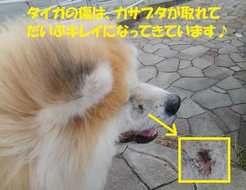 お決まりの儀式(笑)_f0121712_23414361.jpg